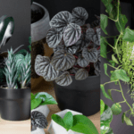 Easy to Take Care of Houseplants