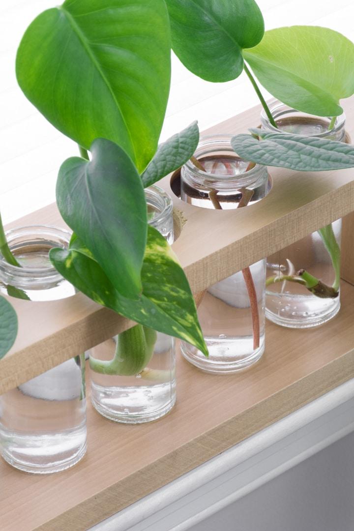 DIY plant propagation station