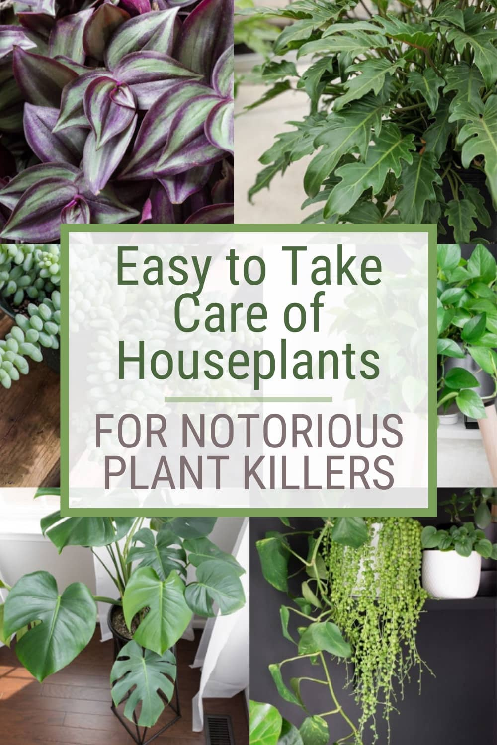 pinnable graphic with photos of houseplants and text overlay about easy to take care of houseplants