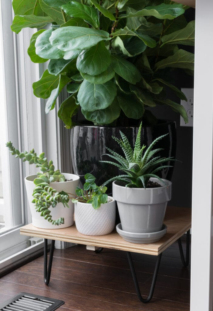 Simple DIY Midcentury Plant Stand with hairpin legs