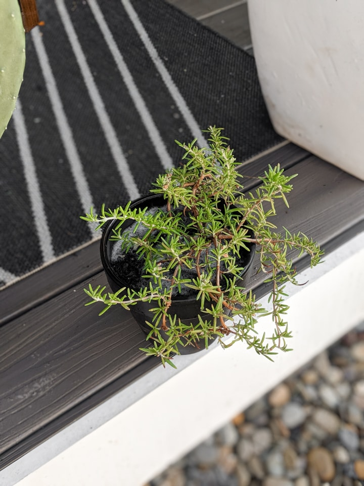 How to Debug Plants to Bring Indoors