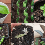 How to Propagate 8 Different Houseplants