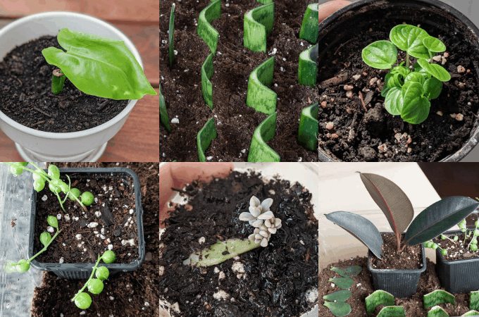 Best Plants to Propagate