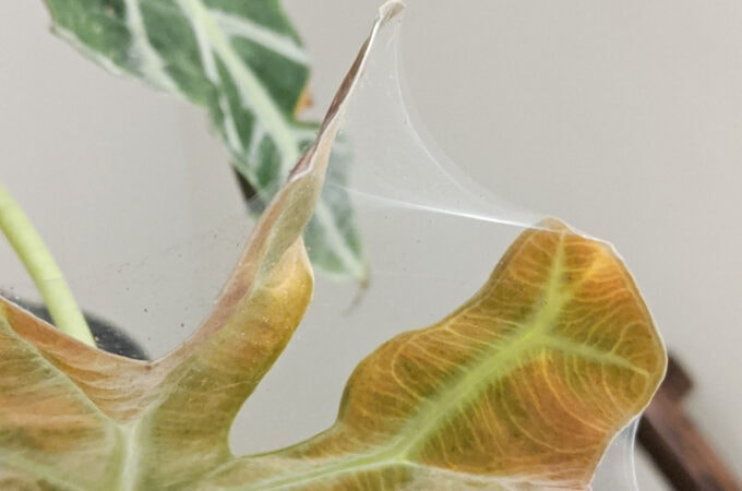 How to Get Rid of Spider Mites on Plants