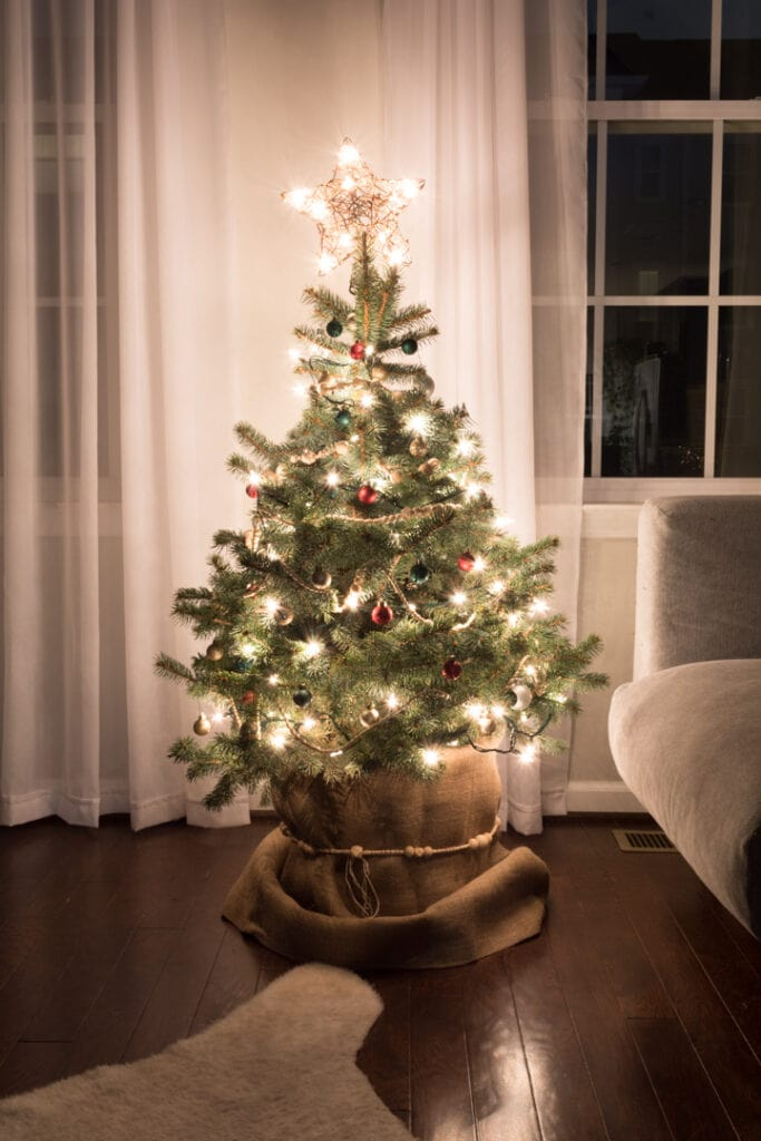 live potted christmas tree with lights on