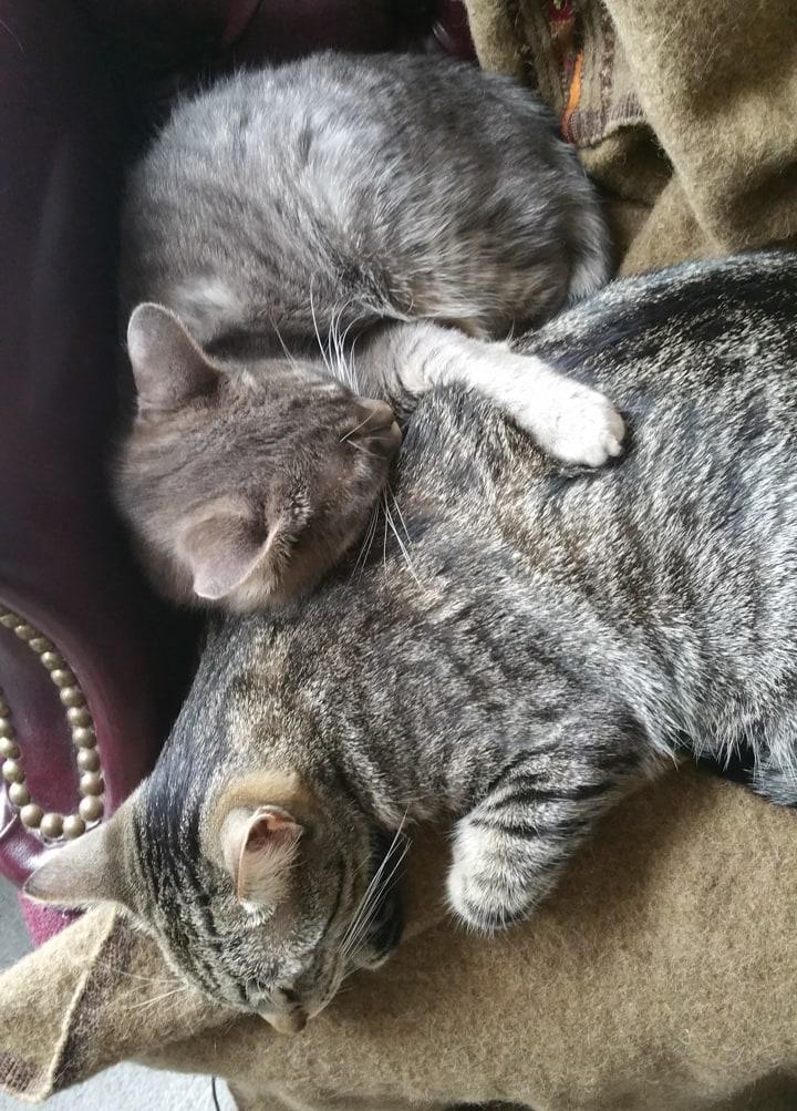cute rescue kitties cuddling