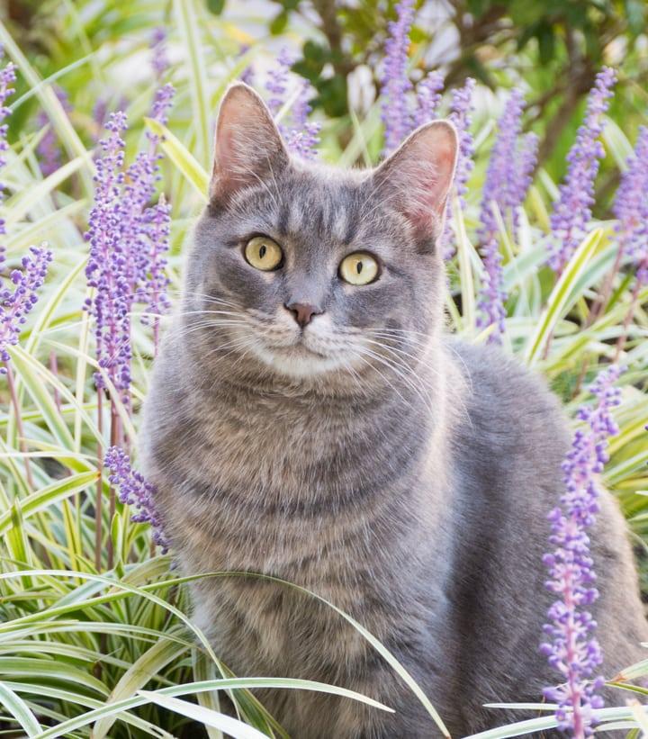 beautiful kitty in flowers