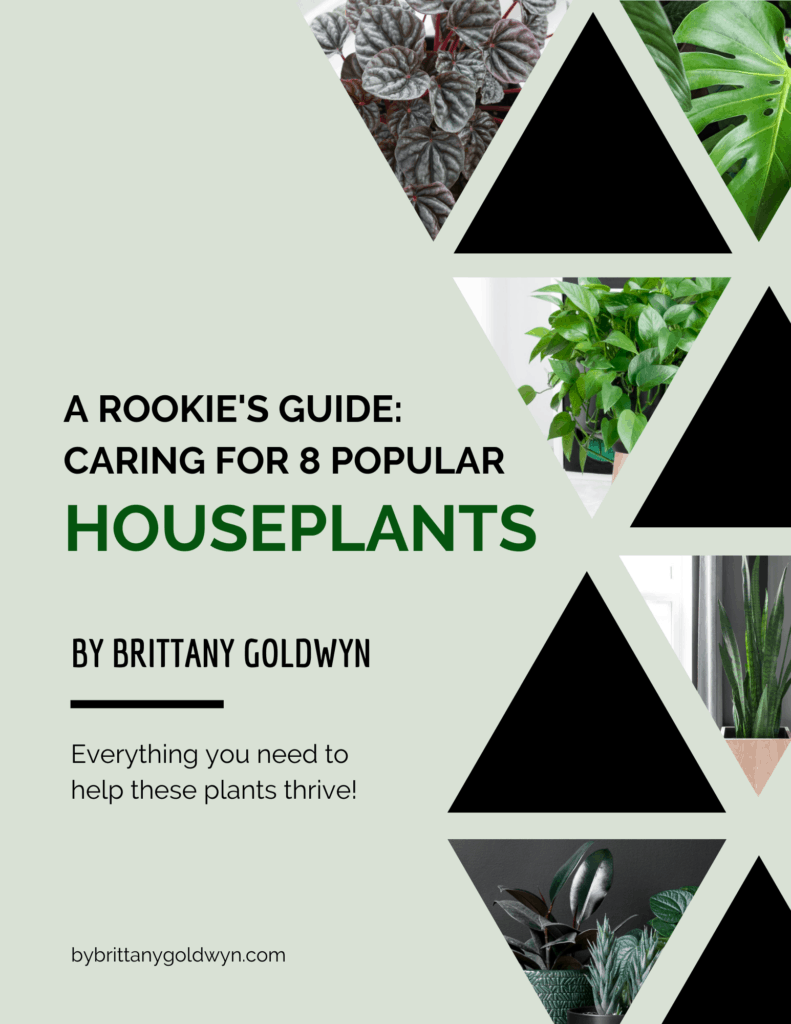 how to care for 8 popular houseplants