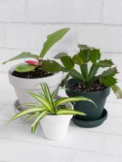 beautiful plants in modern painted terracotta pots