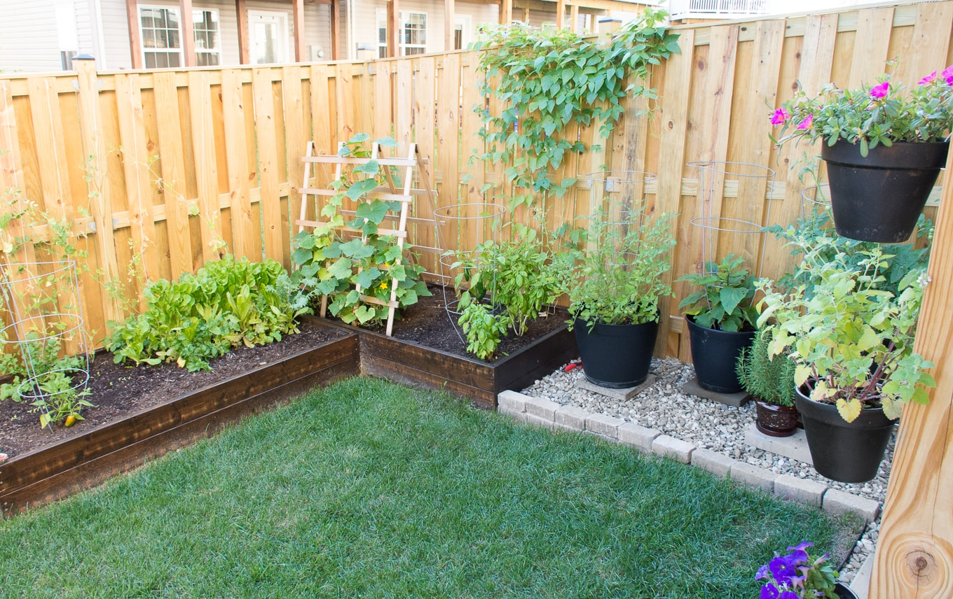 Vegetable garden in a small yard