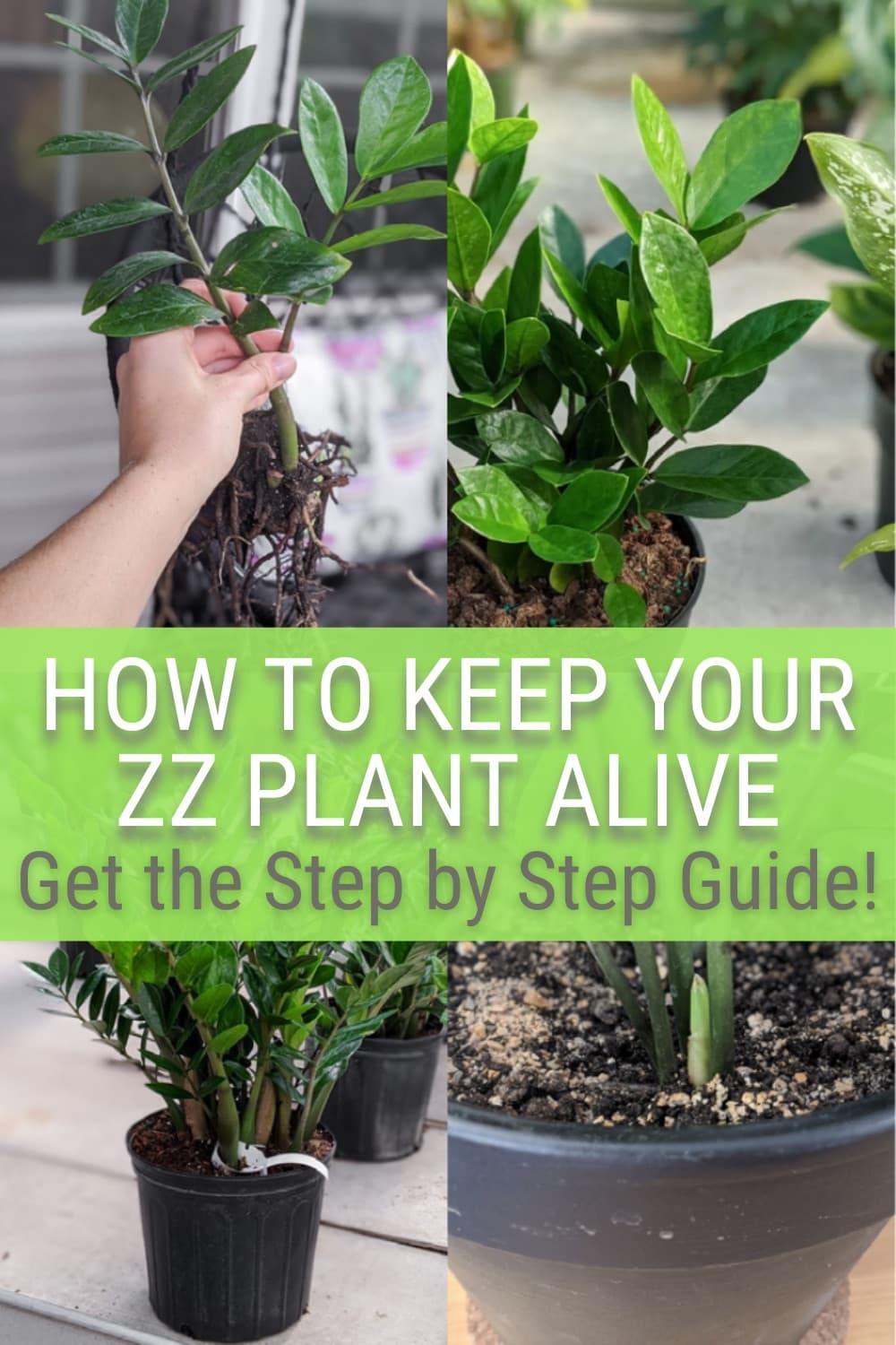 image collage of how to care for a ZZ plant with text How to keep your ZZ plant alive