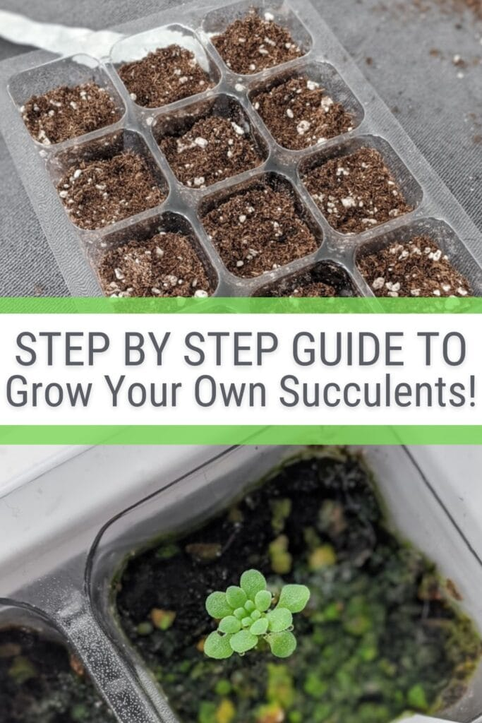 image collage of succulent growing containers with text Step by Step Guide to Grow Your Own Succulents