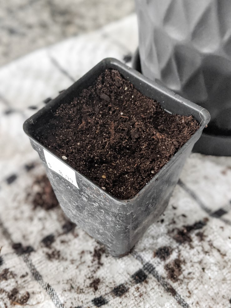 soil in a container