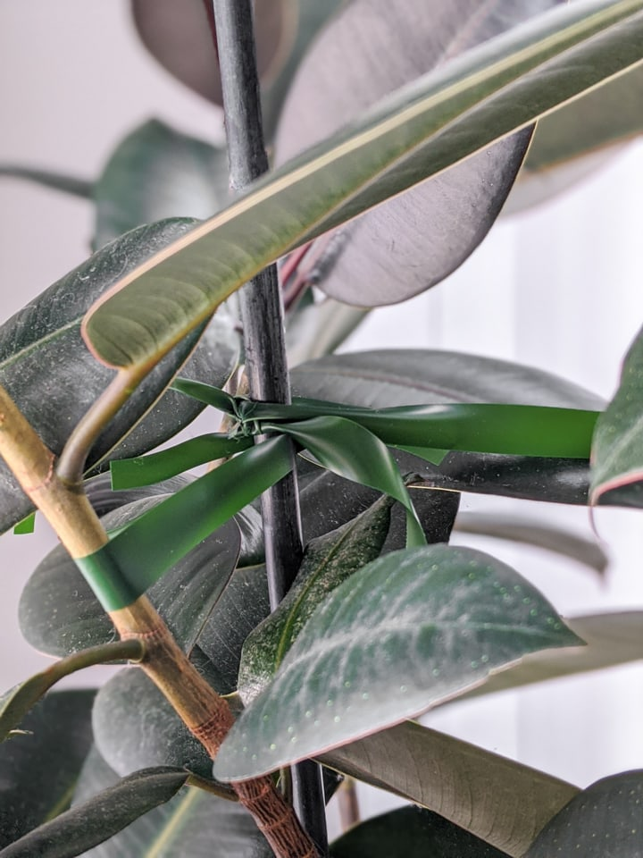 how to keep tall potted plants from falling over