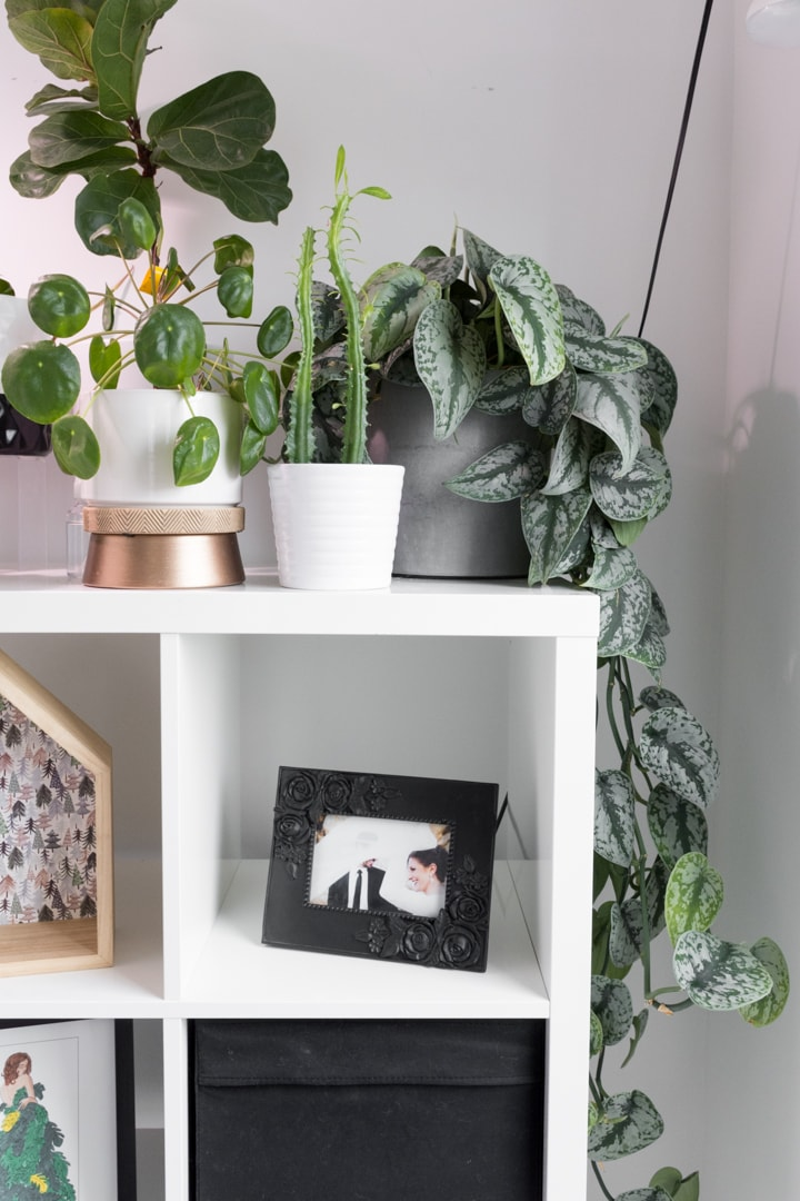 Scindapsus pictus plant and other plants on a shelf