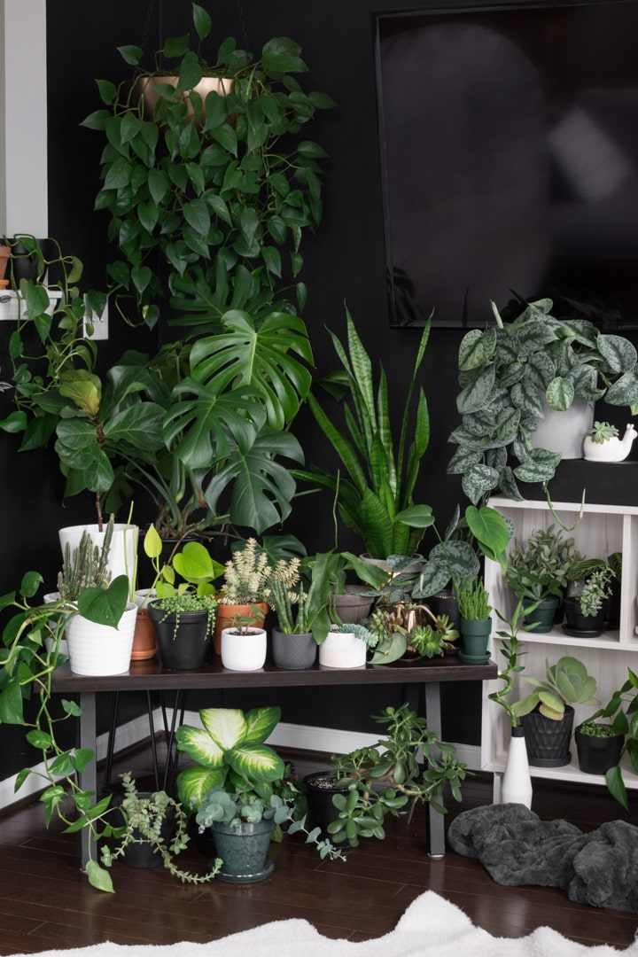beautiful plants in a living room