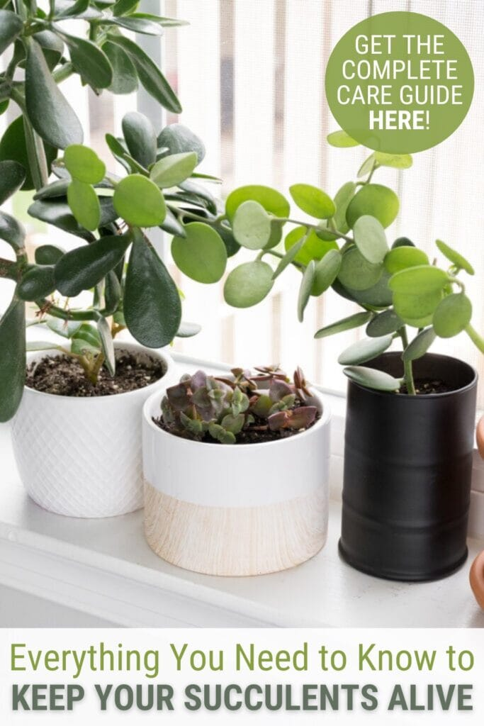 plants sitting on a windowsill  with text Everything You Need to Know to Keep Your Succulents Alive, Get the Complete Care Guide
