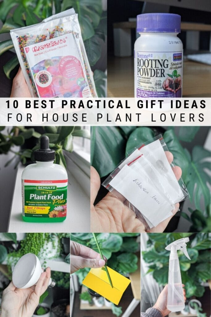 Affordable and practical ideas for houseplant lovers