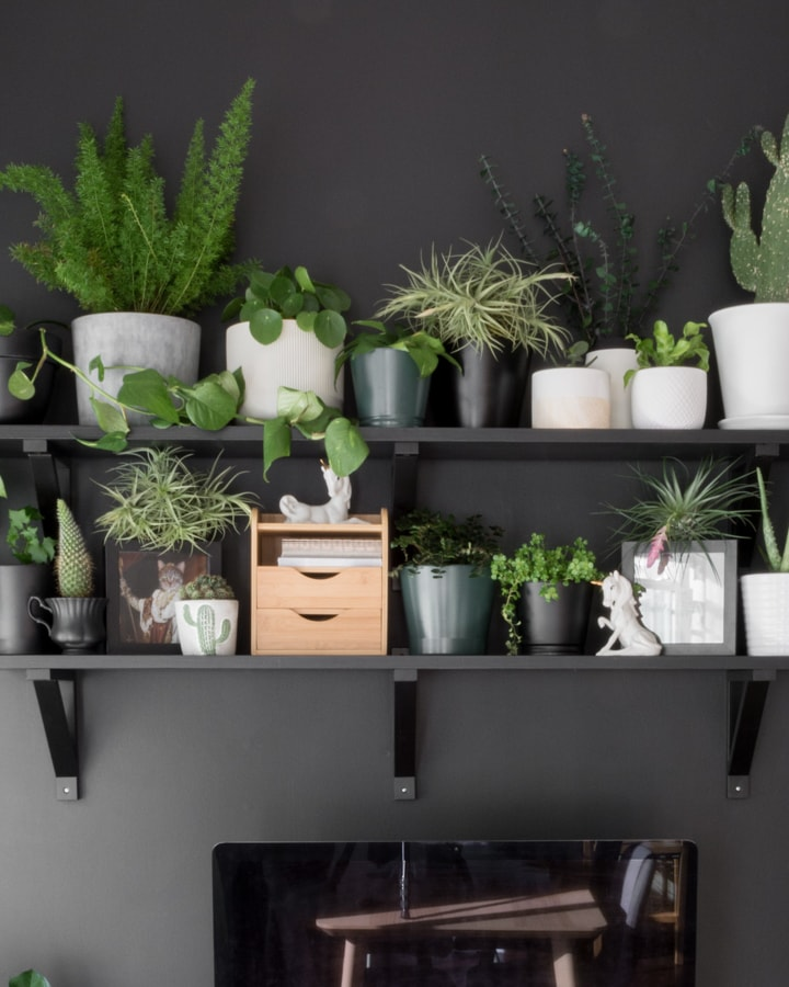 air plants on shelves with other plants