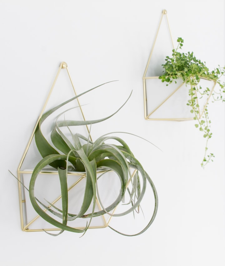 air plant hanging on a wall