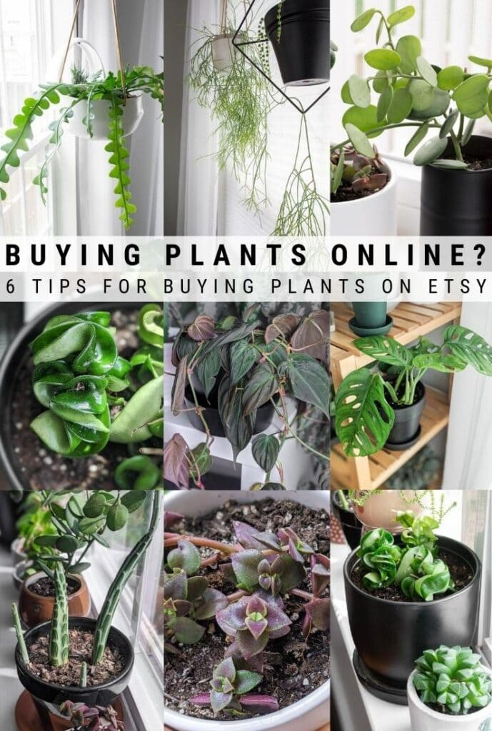 tips for buying plants on Etsy