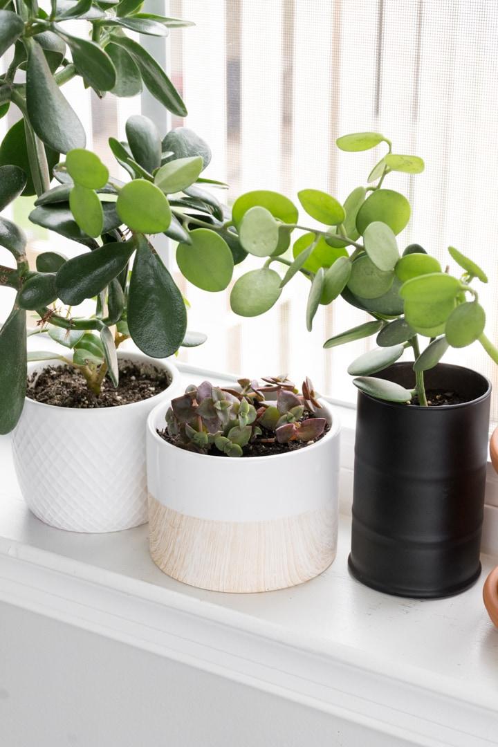 windowsill with plants