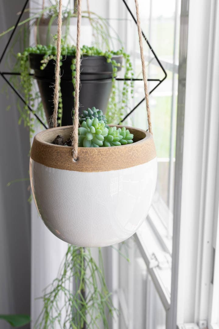 burro's tail succulent in a hanging planter