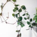 How I Vine Houseplants