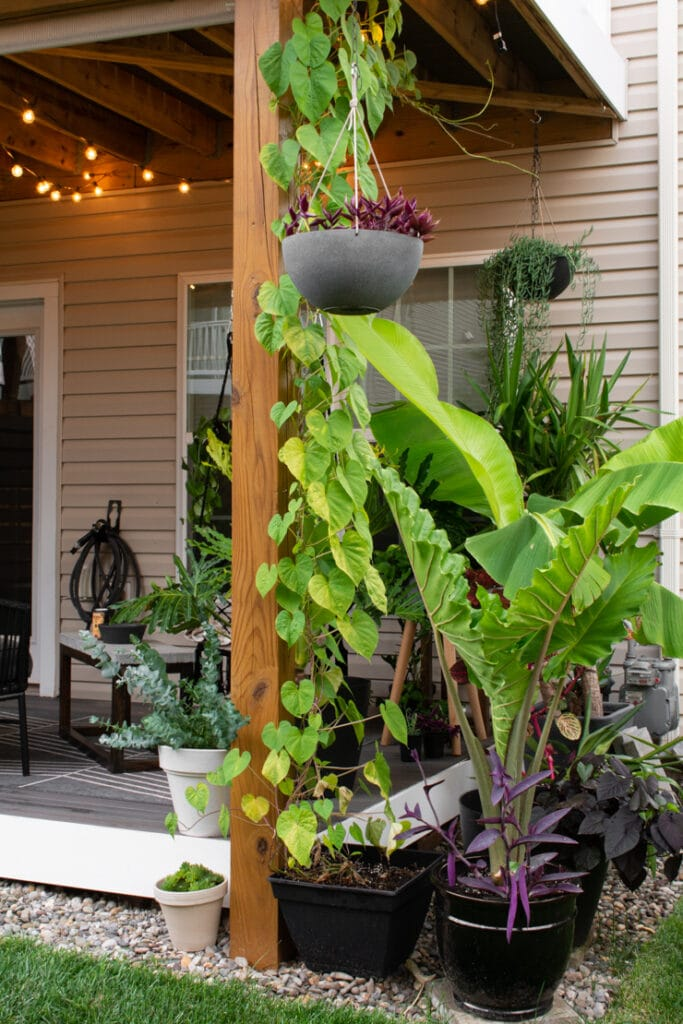 large plants in a townhouse backyard with rock landscaping
