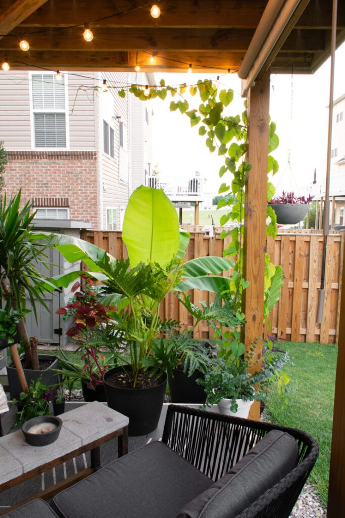 beautiful plants on a small townhouse deck