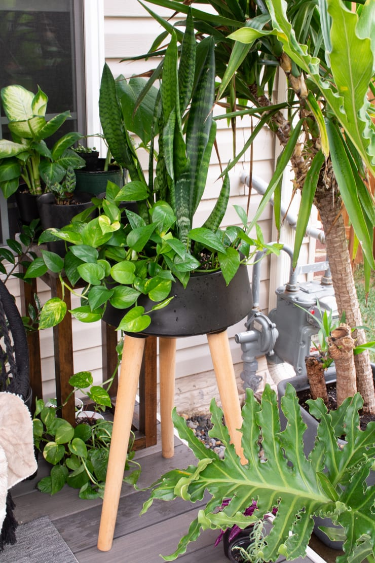 beautiful tropical-looking plants on a deck