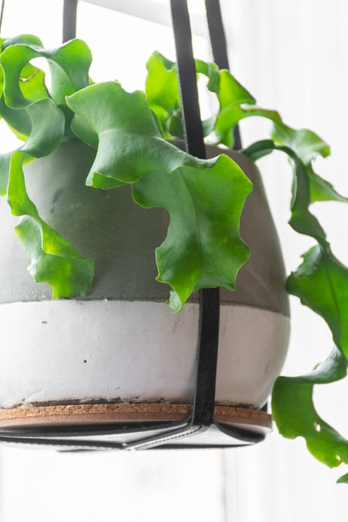contemporary leather plant pot hanger from Amazon