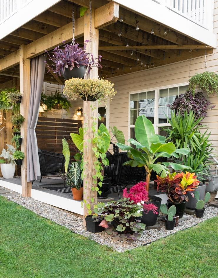 beautiful small backyard with plants