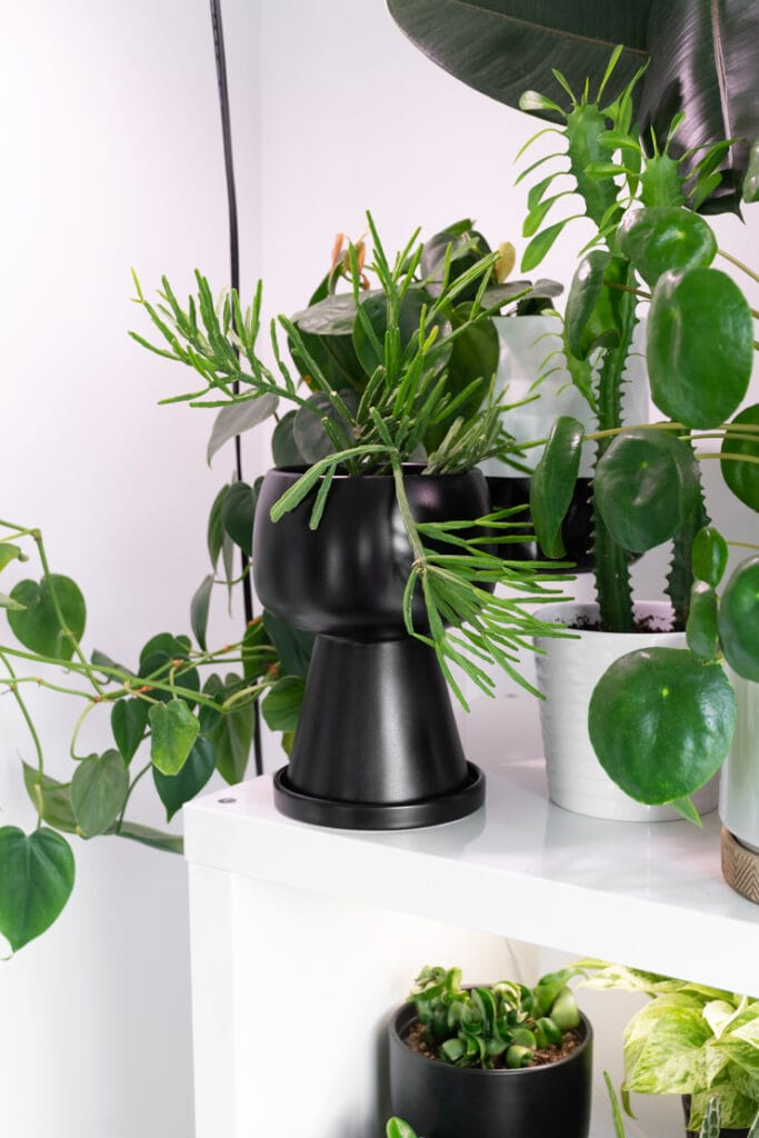 vase-shaped modern planter from Amazon