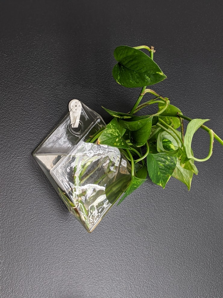 glass wall vase for water propagation from Amazon