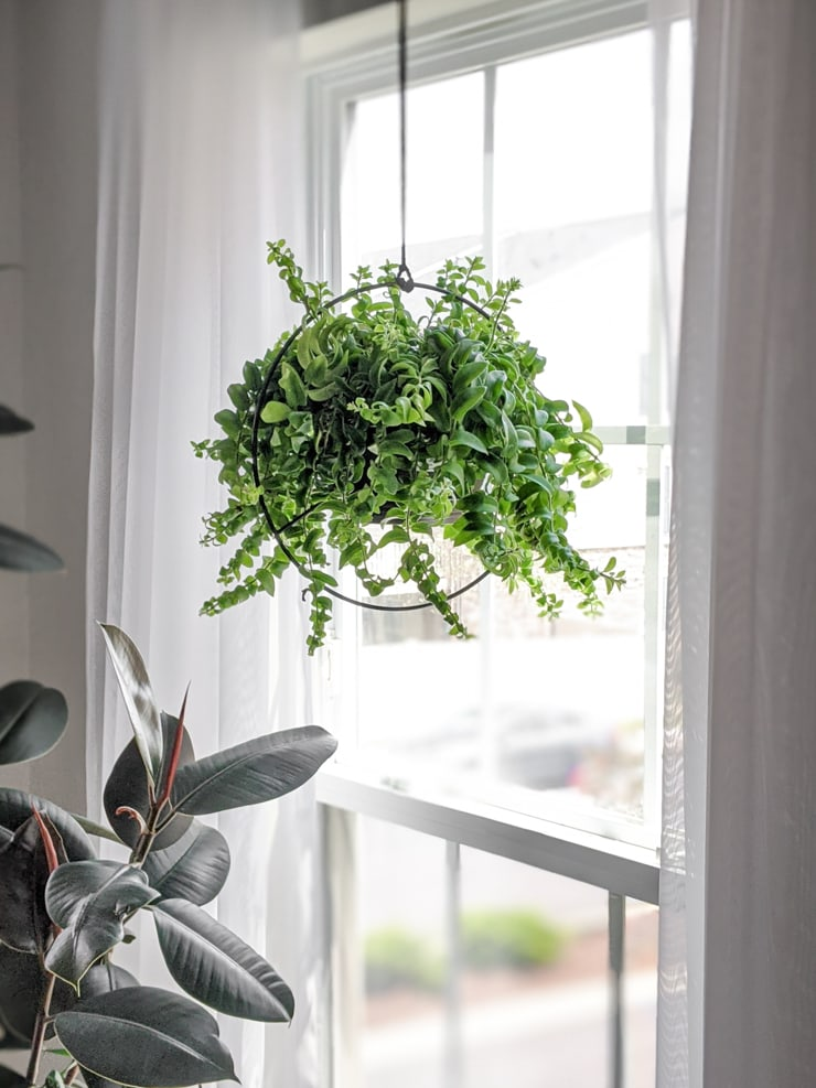 modern black plant pot hanger from Amazon