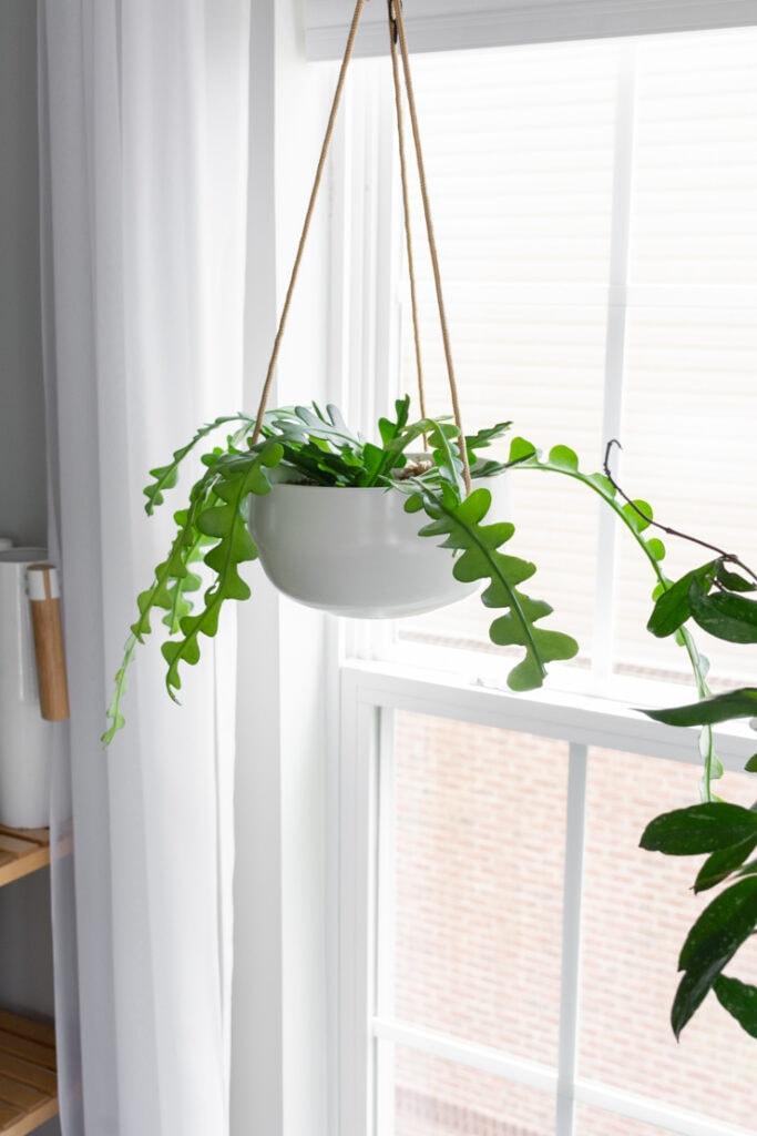modern ceramic white hanging planter from Amazon