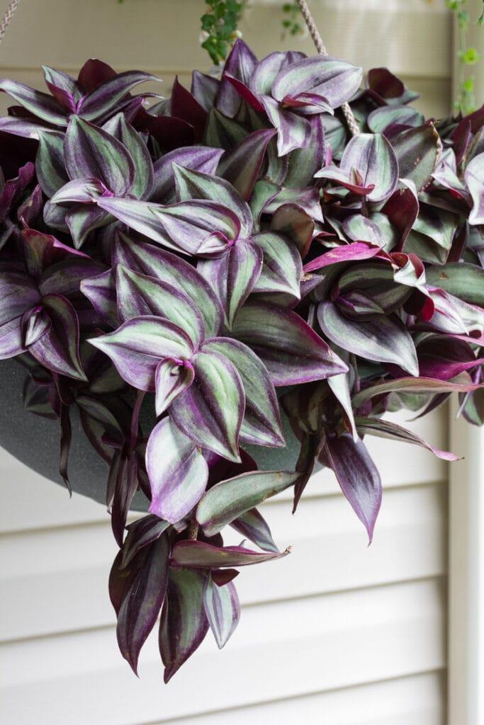 modern hanging indoor/outdoor planter from Amazon