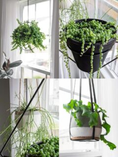 My Favorite Hanging Planters From Amazon