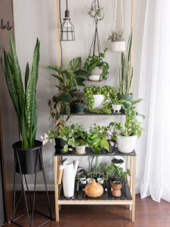 DIY tiered plant stand for indoor plants