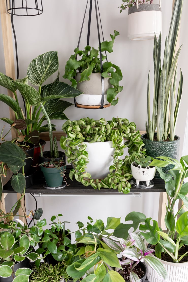shelves with beautiful plants