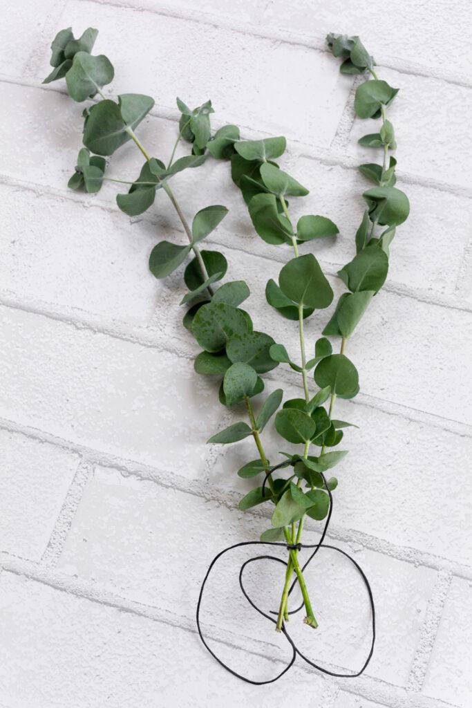 How to Dry Eucalyptus using air