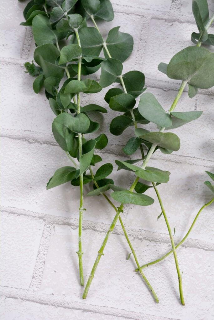 eucalyptus on a table