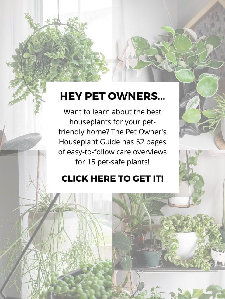 sales graphic for the pet owner's houseplant guide
