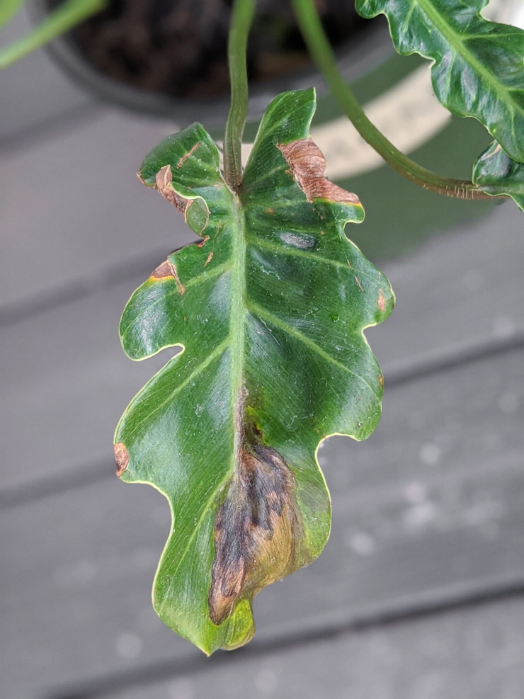 brown leaves on a plant