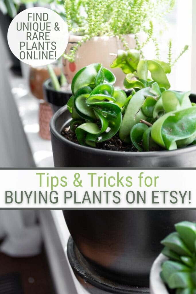 close up of plant in black pot with text Tips & Tricks for Buying Plants on Etsy!