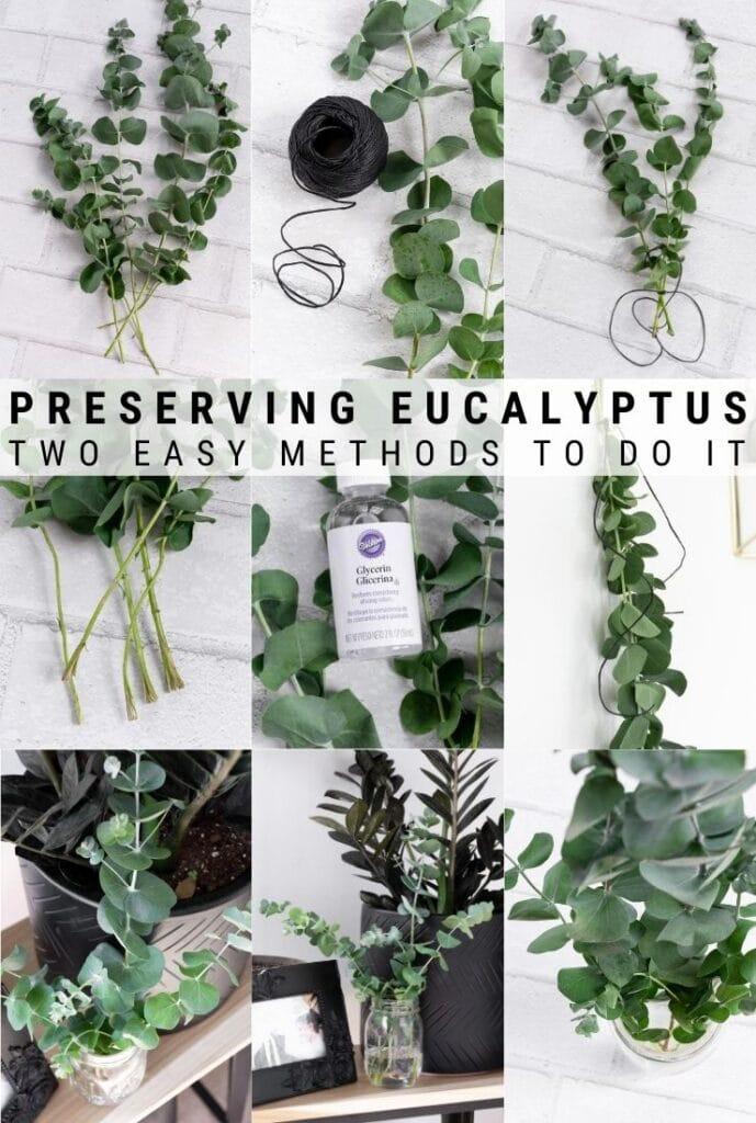 how to dry eucalyptus
