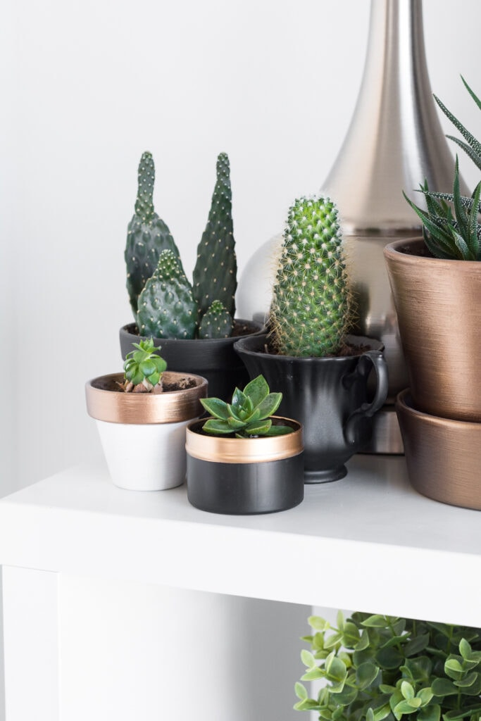 Succulents on a shelf with cacti