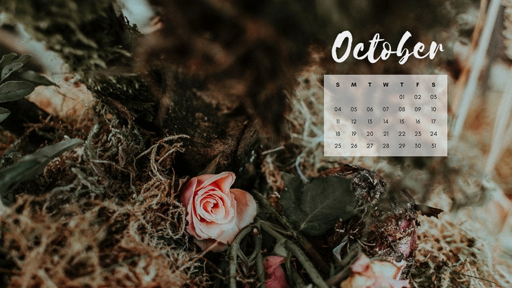October 2020 Desktop Background with fall florals