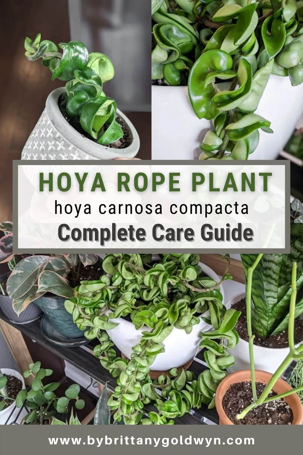 image collage of hoya rope plant care with text overlay